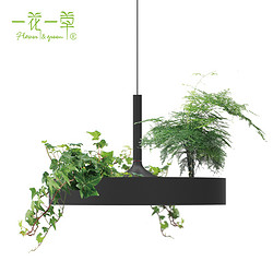 植物吊灯家居装饰艺术品 净化空气 家居装饰 创意家居