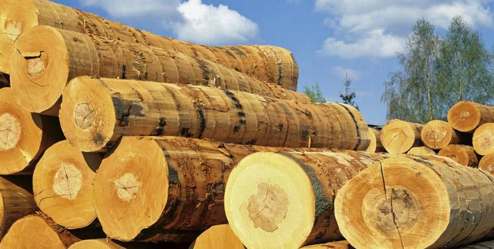 受益一带一路 地板业和木材商迎来机遇
