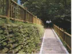 越秀木-OD景观护堤